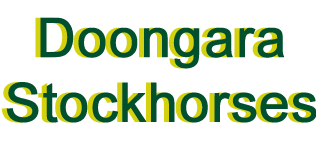 Doongara Stock Horses